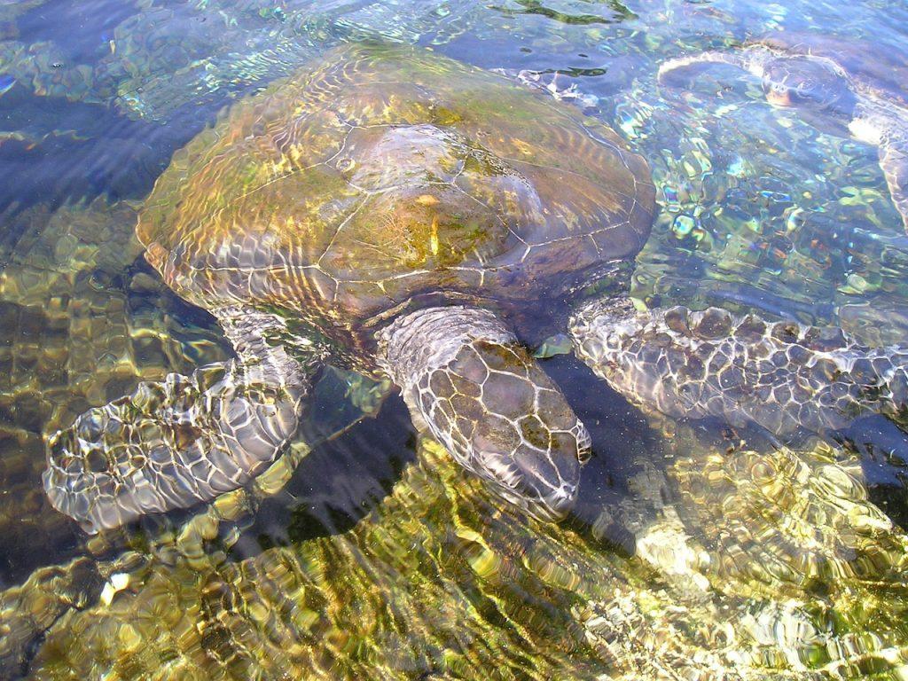 turtle-54_1280