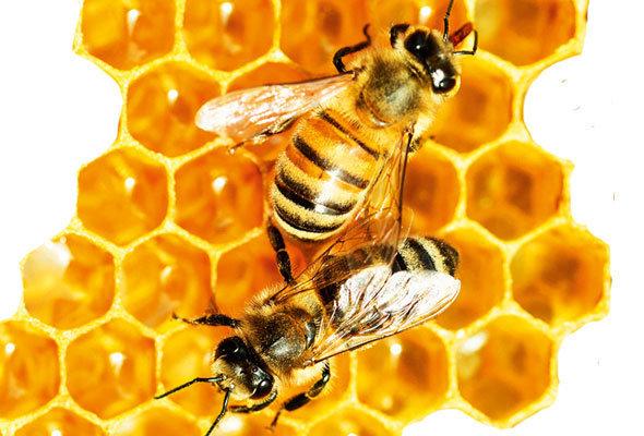 abelhas-e-mel